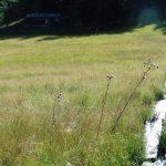 Moor Eulenwiesen