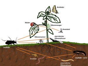 Boden-Nahrungsnetz